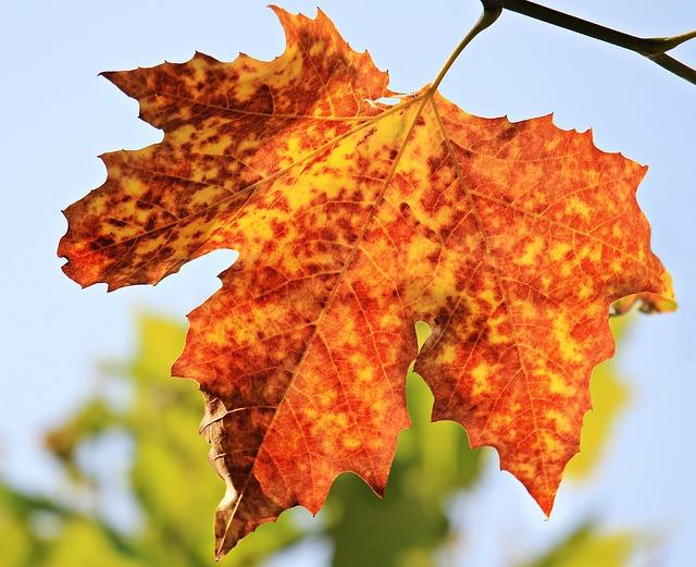 3 báječné tipy pre jesenné dekorácie