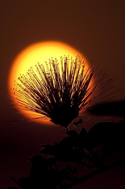 Nočná záhrada slnkom zaliata
