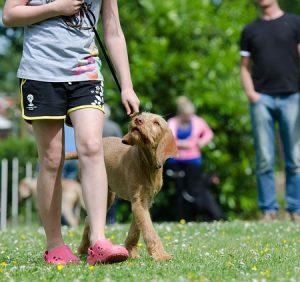 Moderný výcvikové pomôcky veľmi uľahčí výcvik vášho psa